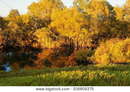 Fall landscape in sunny weather. River and yellowed fall trees along the river at the sunset. Fall forest nature. Fall landscape scene in sunlight - golden fall trees at the sunset. Fall nature background
