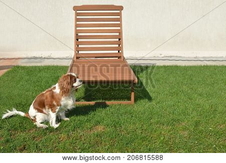 Deck Chair And Dog