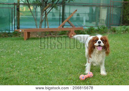 Charming Dog In A Nice Garden