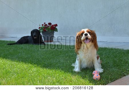 Dogs Resting On A Garden Lawn