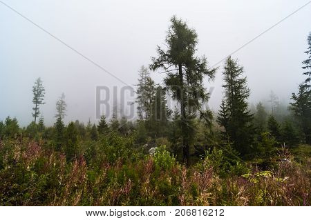 beautiful forest in the fog in the Tatra Mountains