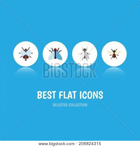 Flat Icon Housefly Set Of Hum, Housefly, Bluebottle And Other Vector Objects
