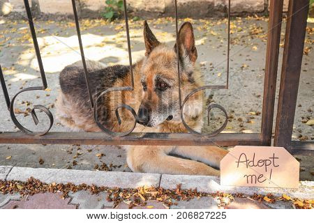 Dog behind bars and carton with text ADOPT ME, outdoors
