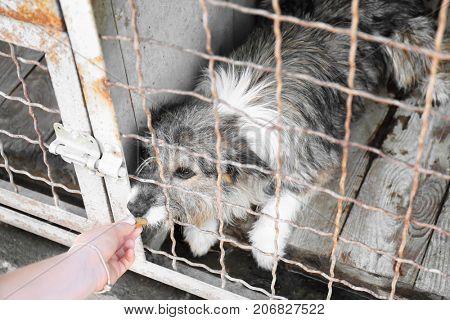 Female volunteer feeding dog at animal shelter. Adoption concept
