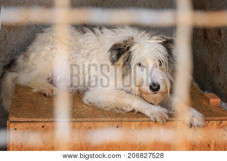 Dog at animal shelter. Adoption concept