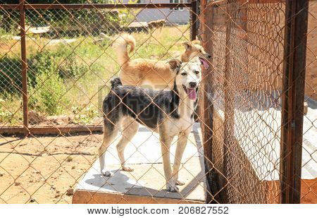 Dogs at animal shelter. Adoption concept