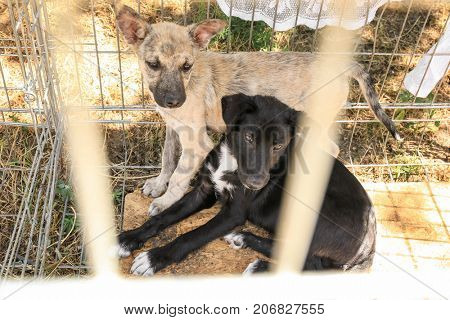 Puppies at animal shelter. Adoption concept