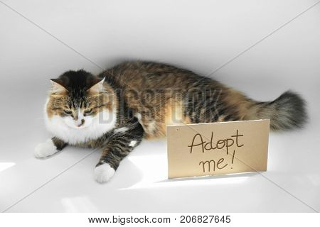 Fluffy cat and carton with text ADOPT ME on white background