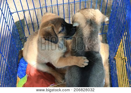 Cute homeless puppies in cage. Adoption concept