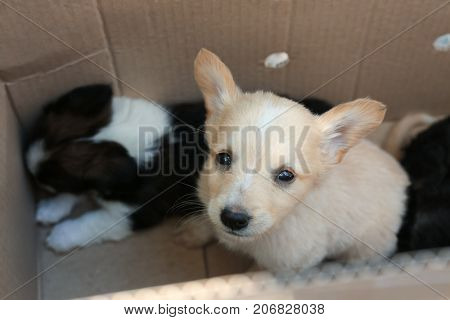 Cute homeless puppies in box. Adoption concept