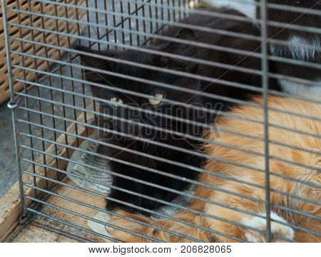 Cute homeless cats in cage. Adoption concept
