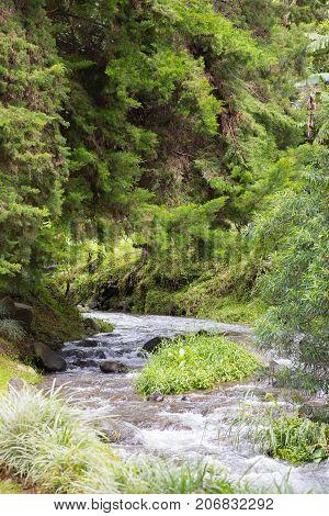 Jungle river in Escondido Valley Boquete Panama