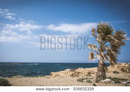 Amazing pictorial view of a palm with strong air and a small island at the background, Malia, Crete, Greece.