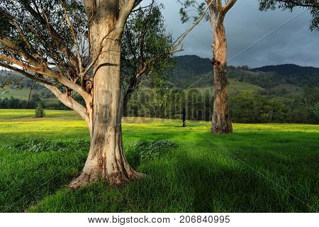 Trees In Afternoon Light