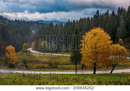 Yellow Trees Along The Mountain Road In Autumn