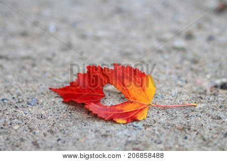 Lone red autumn leaf with a heart shape cut out of the center