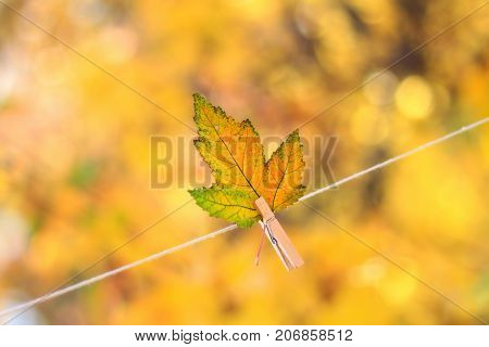 Colorful autumn leaf hanging on a clothesline by a clothespin