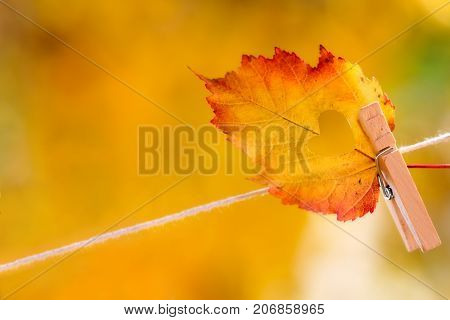 Colorful autumn leaf with a heart shaped hole cut in the center hanging on a clothesline by a clothespin