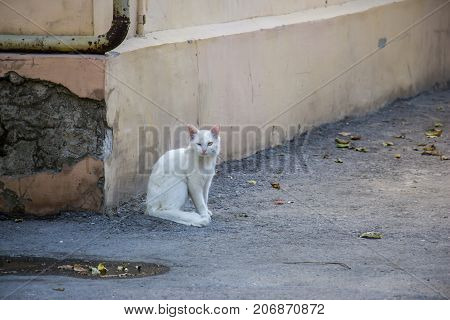 White cat on the street in the early morning