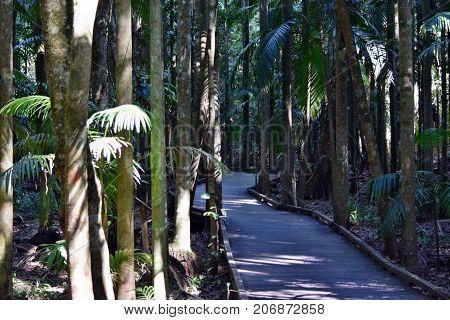 Amazing Australian Rain Forest