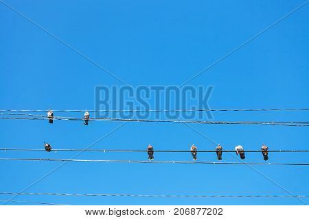travel to Crimea - several pigeons sit on electric wires on Lenin Street Embankment on coast of Black Sea in Alushta city with blue sky on background
