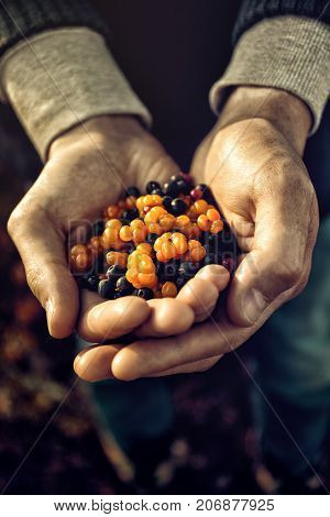 Close-up of anonymous person holding pile of mixed wild berries collected in woods.