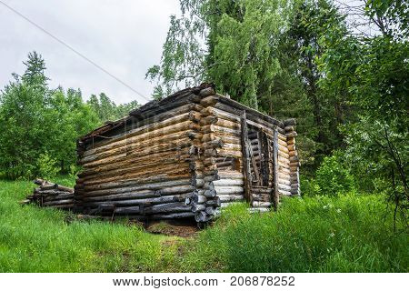 Rotting logs in the wooden house on background of green grass and leaves.
