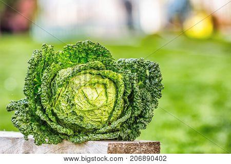 Kale Cabbage Vegetable. Fresh Kale Head In The Garden On Woden Board