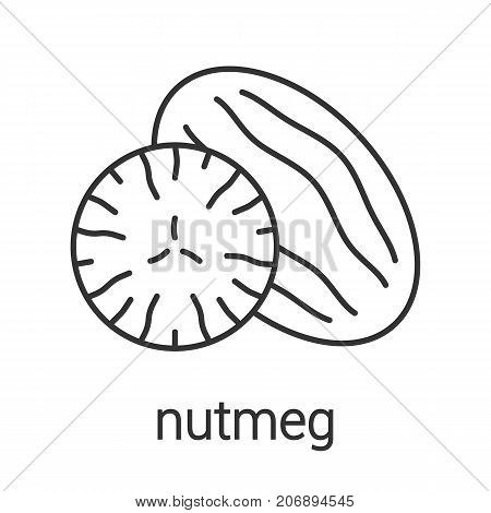 Nutmeg linear icon. Thin line illustration. Contour symbol. Vector isolated outline drawing