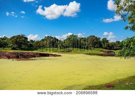 Beautiful landscape of tropical marsh in Asia