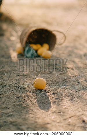 The basket with lemons on the ground
