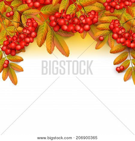 Beautiful greeting card with realistic 3d mesh rowan branch isolated on a white background. Rowan branch with orange leaves and red ashberry. Vector illustration