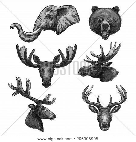 Wild animals heads sketch icons. Vector set of elephant tusks, grizzly bear or forest elk antlers and deer or reindeer for African safari zoo park welcome poster or wildlife nature protection design