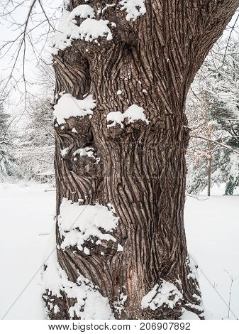 Fresh snow on this shapely tree trunk in this Freehold NJ park.