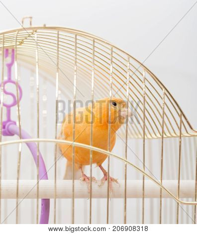 bird in a cage . Photos in the studio