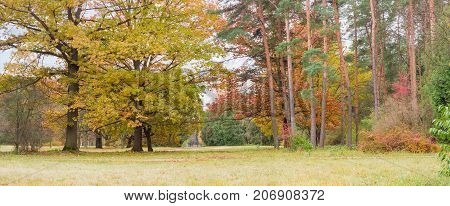Panorama of the autumn landscape park with oaks and other deciduous and conifers trees