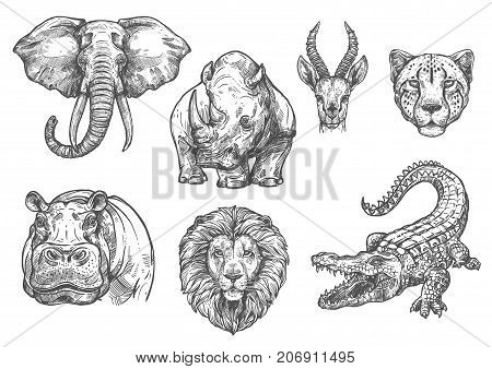 Wild African animals sketch icons. Vector isolated set of elephant, hippopotamus or rhinoceros, lion or alligator crocodile and tiger cheetah for safari adventure or welcome to wildlife zoo design