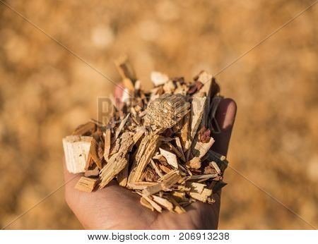 A Handful Of Wood Chips.