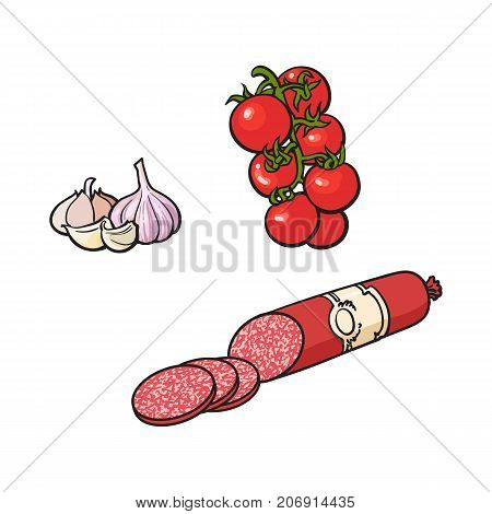 Salami sausage, vine tomato and garlic, sketch style vector illustration on white background. Realistic hand drawing of smoked salami sausage, red tomato and garlic, bulb and cloves