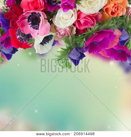 Fresh colorful Anemones fresh flowers border posy over blue bokeh background