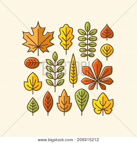 Colorful autumn leaves line icons set. Tree leaf logo symbol. Fall design element.