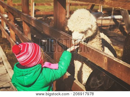 little girl feeding lama at farm, kids learning animals