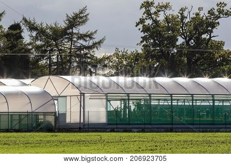 Commercial greenhouse polytunnel buildings with sunlight refecting off polythene roof. Garden plant growing structures in front of trees.
