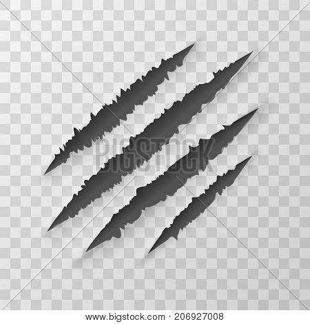 Claws Animal Scratches Isolated On Transparent Background. EPS10 Vector