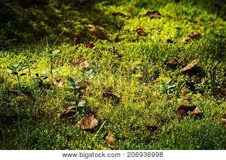 Moss Carpet With Plants In Autumn Forest