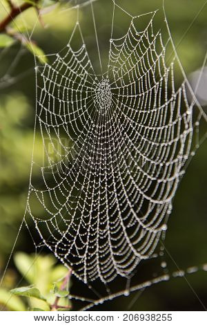 Closeup on Spider's Web. Can be used as background