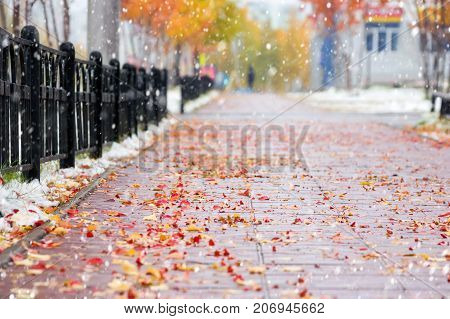 Autumn city landscape with fallen leaves on the pavement