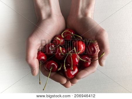 Man hands full of  of fresh sour cherries top view Cherry.. Red cherry. Fresh cherries. Cherry on white and tablecloth background . Healthy fruits.