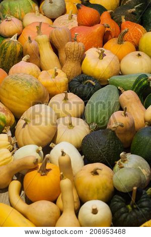 Vertical photo of heirloom different varieties squashes and pumpkins.