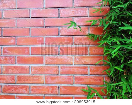 Red brown tone Brick wall with bamboo tree